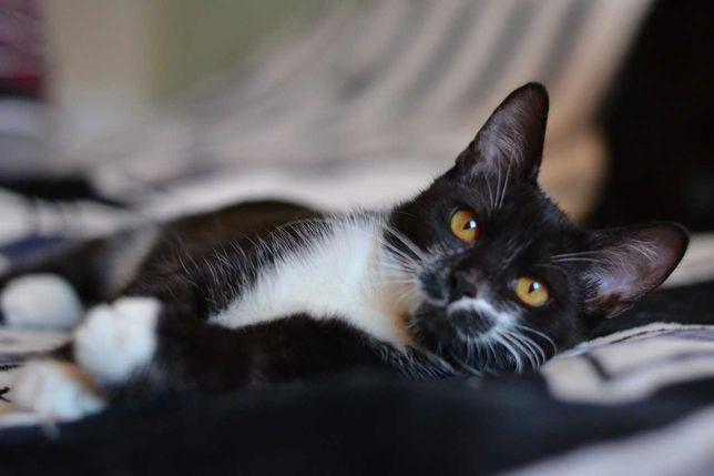 харизматичний юний котик 5м