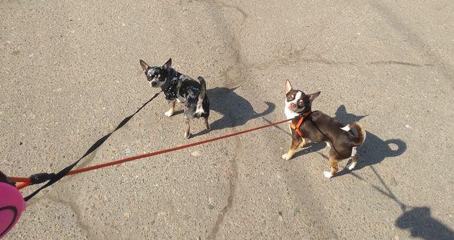 Передержка вашей собачки