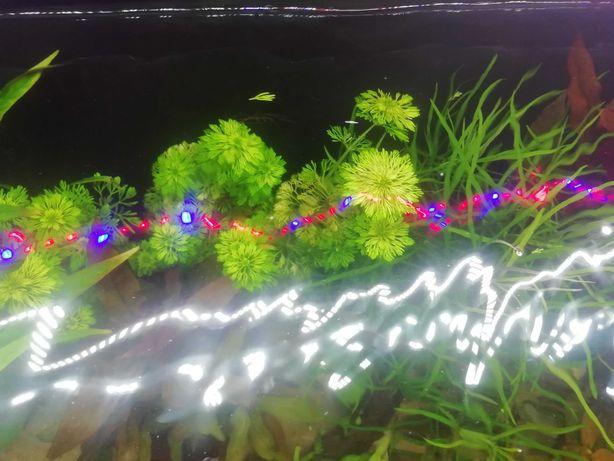 Rosliny akwariowe z przycinki