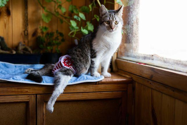 Отдам котенка инвалида,задние лапы не ходят, 7 месяцев,стерилизована