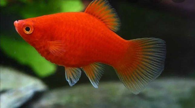Rybki akwariowe różne gatunki
