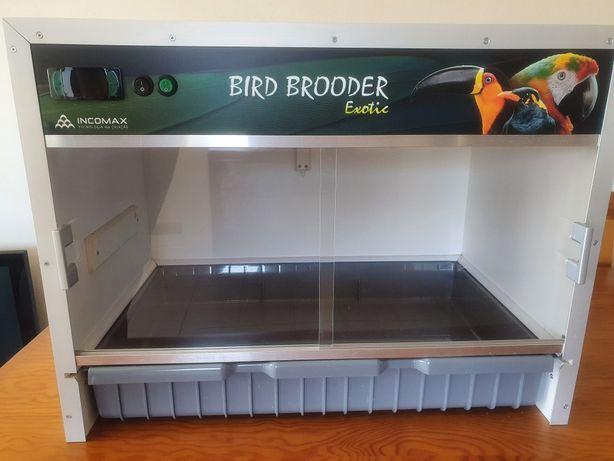 Criadeira/Maternidade para aves