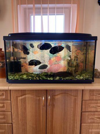 Аквариум 240 литров с рыбками и оборудованием.