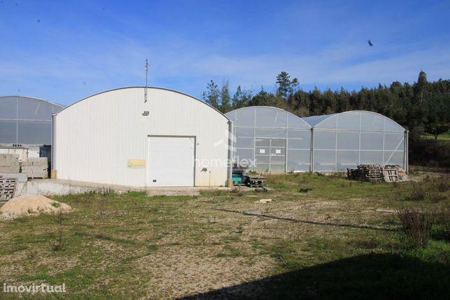 Estufa de alface e outras leguminosas em Hidroponia com 2.100m2