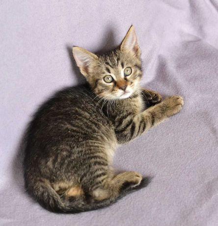 Котик в ожидании счастья, Мартин, 2 месяця, кот