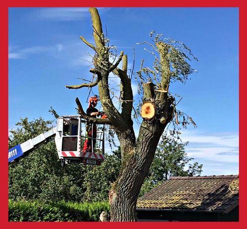 Wycinka drzew, krzaków, podcinanie drzew z podnośnika