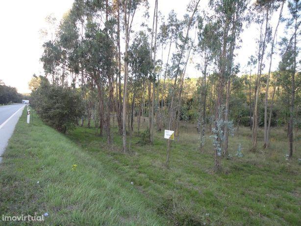 Terreno Rústico 9510m2 – Pena
