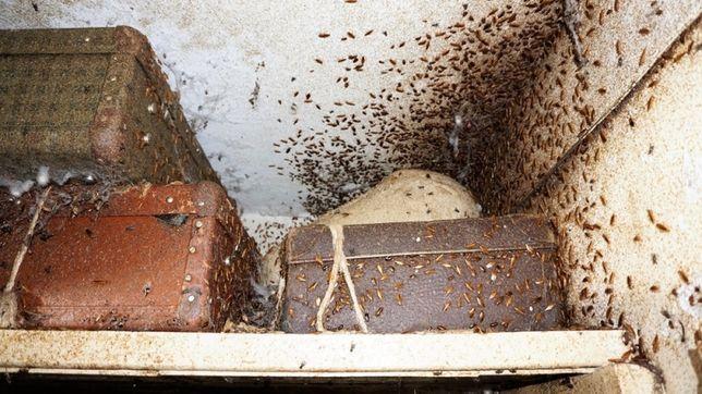 Научу как навсегда избавиться от тараканов. Секретное средство. 160грн