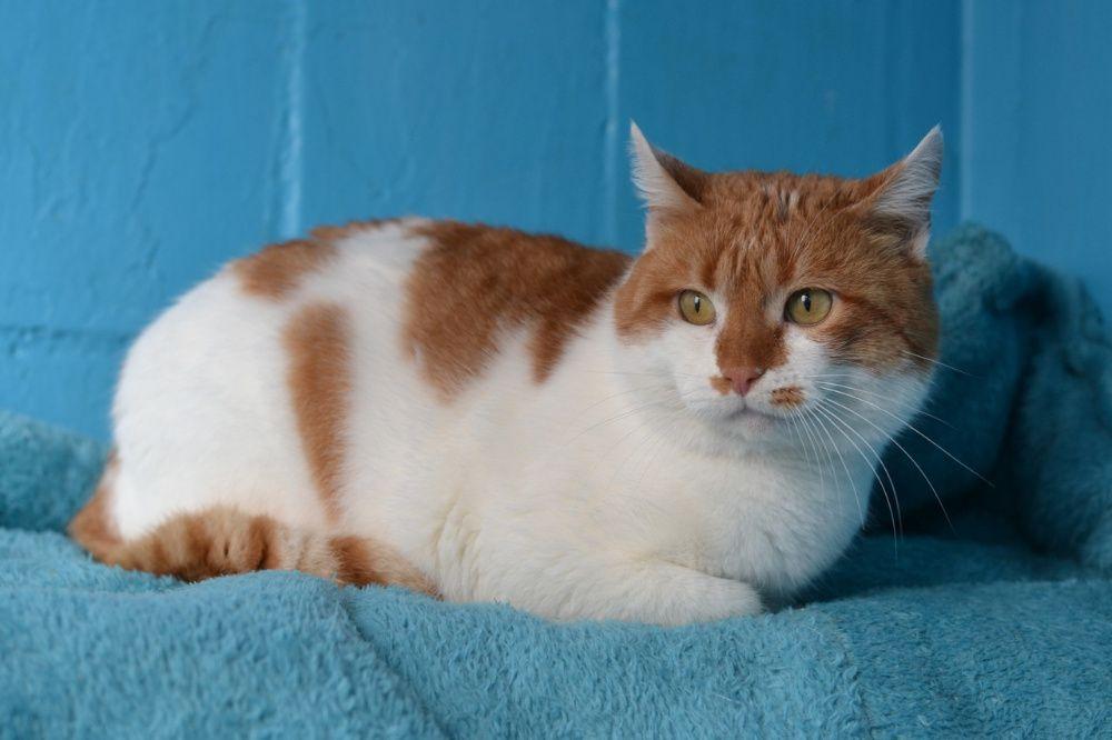 котик з фігуркою сардельки 1р Киев - изображение 1