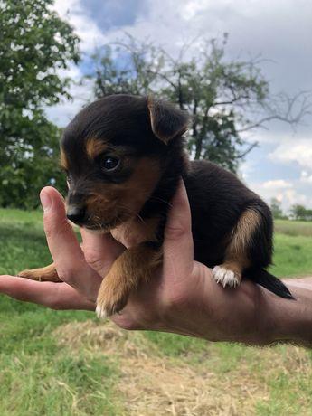 Отдам в хорошие руки щенка мальчика