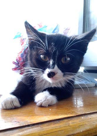 Котик в добрые руки. Три месяца.