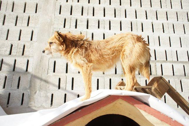 Nina - cadela de porte pequeno