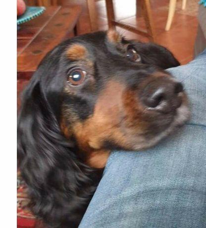 Poszukiwany pies Lemek