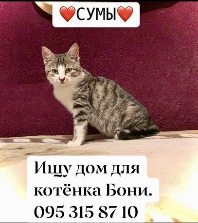 Котенок -девочка Боня в добрые руки.