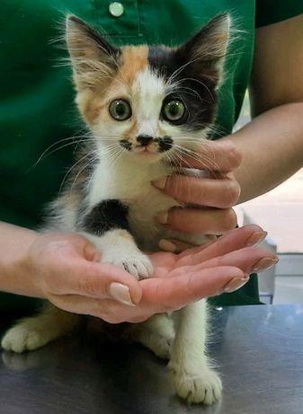 Котенок в добрые руки 2 мес.