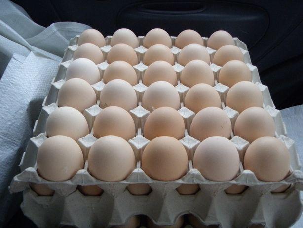 Jajka wiejskie RADZIEJÓW z dowozem pod dom GRATIS