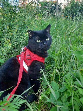 Пропала черная кошка. Покотиловка. Ул Тимирязева