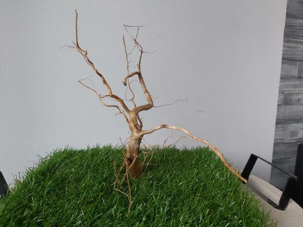 Korzeń w stylu Bonsai 54