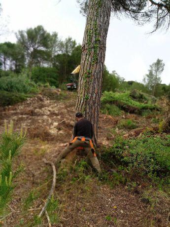 Limpeza de quintas, terrenos, cortes de jardim. Compra de madeiras