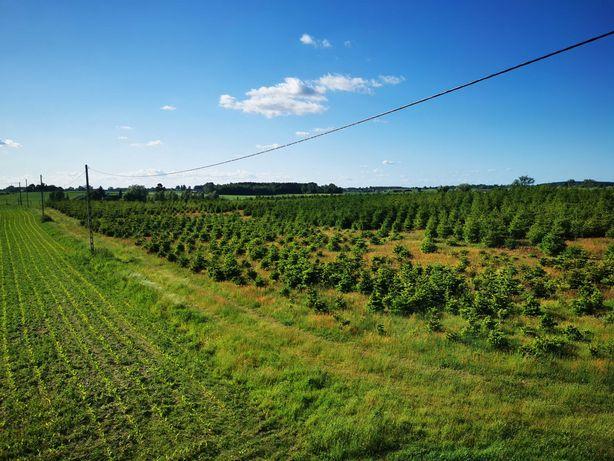 Sprzedam ziemię rolną 14ha