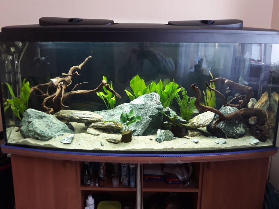 Akwarium 150x50x60 Rzgów - image 1