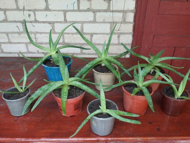 Обмен алоэ на комнатные растения