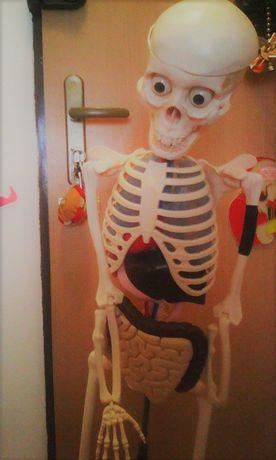 kostek szkielet Tajemnice ludzkiego ciała model człowieka