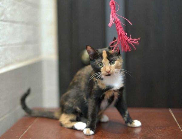 отдам котенка, яркая  девочка, 3,5 месяца