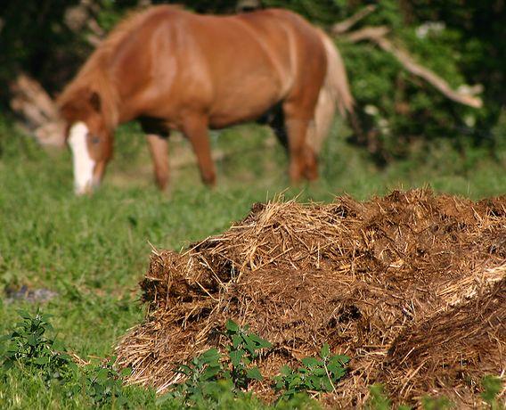 Estrume de cavalo Limpo e curtido Biologico