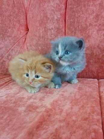 Котята красавчики