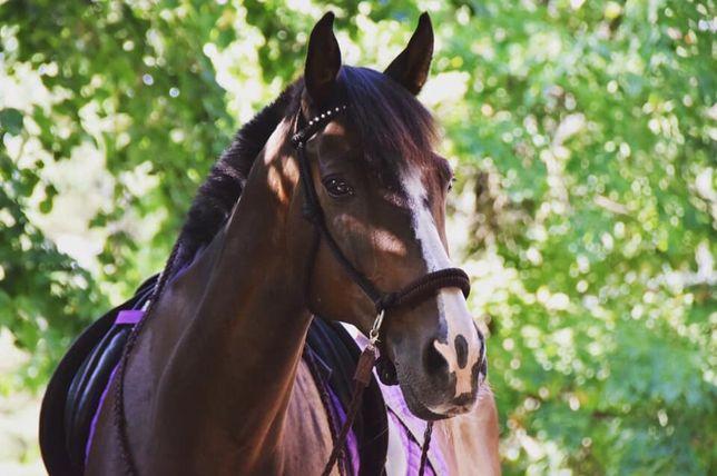 Вас интересуют лошади?