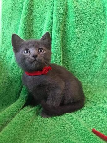 Котёнок серый, чёрный