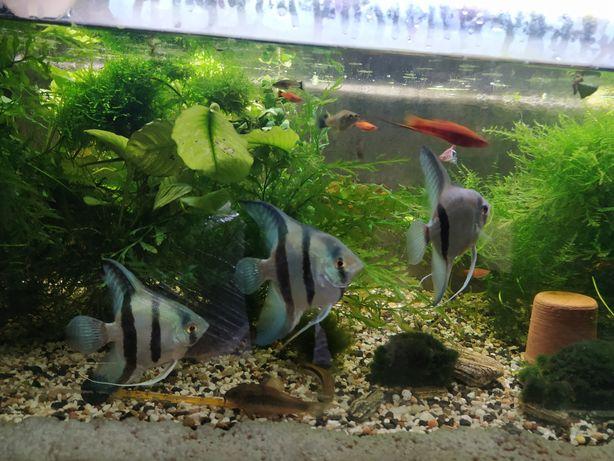 rośliny różne gatunki i ryby