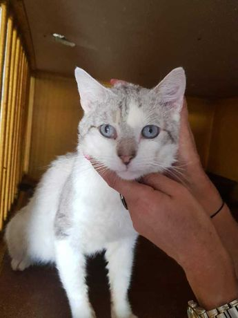 Pan Kot poleca się do adopcji