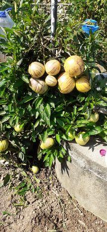 Vasos de frutos tropicais