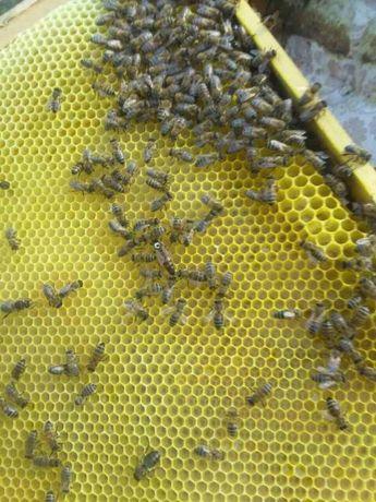 Продам бджоли вулики.