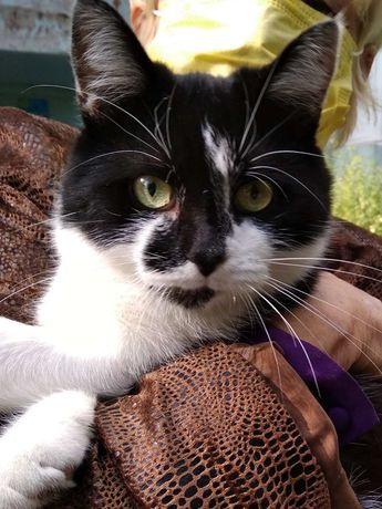 Ищет дом кастрированный кот Даня