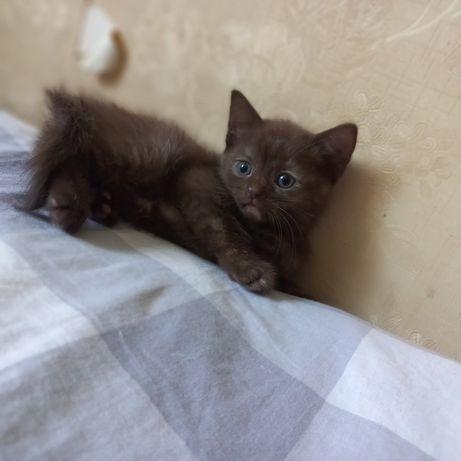Продаются котята ,два рыжих мальчика и две девочки ,одна коричневая