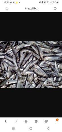 Рыба для корма животных  тюлька