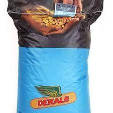 Семена кукуруза МОНСАНТО ДКС 3511
