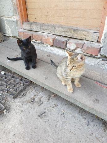 Oddam kotki w dobre rece