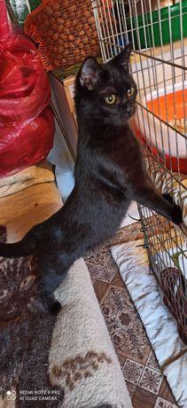 Puma młoda kotka do adopcji