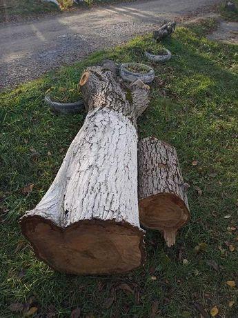 Продам ствол дерева - ореха размером приблизительно 2,5м. на 0,5м