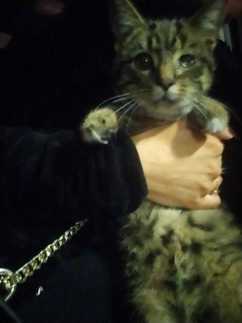 Kotek 3 miesiące do adopcji znaleziony w sklepie Castorama