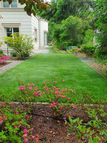 Nawadnianie Systemy Nawadniania Zakładanie Trawników Trawa z rolki