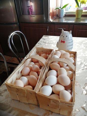 Jaja wiejskie  1,50 sztuka  z wolnego wybiegu swojskie zdrowe, lęgowe