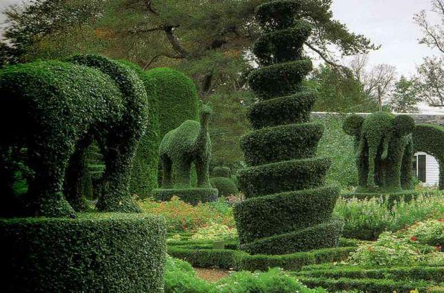 Топиарная стрижка растений, садовник, ландшафт