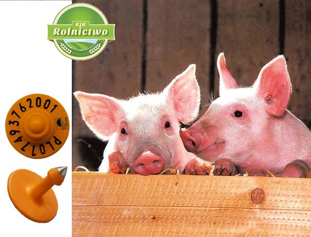 KOLCZYKI trzodowe z numerem gospodarstwa-kolczyk dla świni-WYSYŁKA