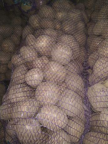Картошка опт и розница