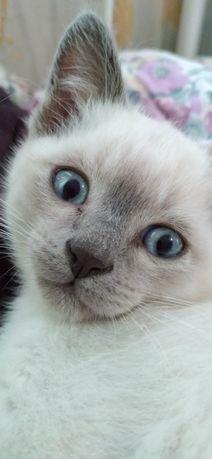 Милый котик ищет свою семью